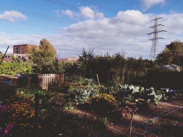 Veggie Garden: Het begin van een groene tijdperk